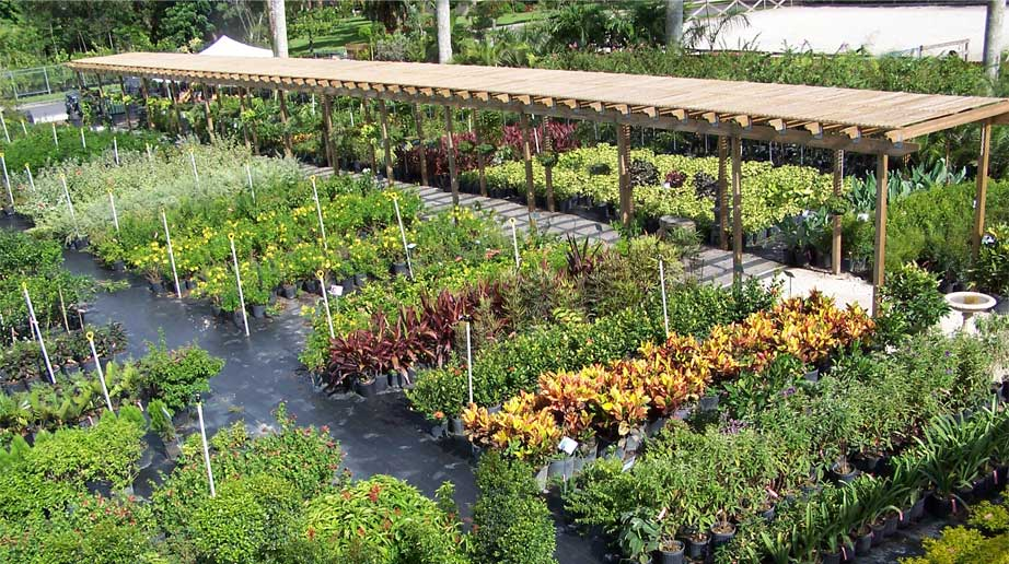 Florida Nursery Mart Plants Sod And