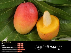 Cogshall Mango