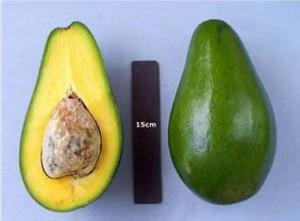 Pollock Avocado