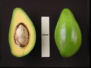 Catalina Avocado