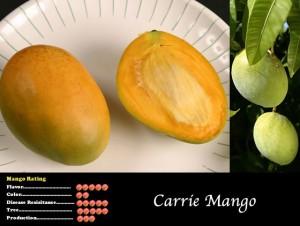 Carrie Mango