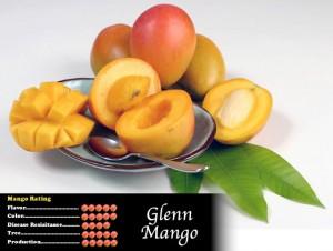 Glenn Mango