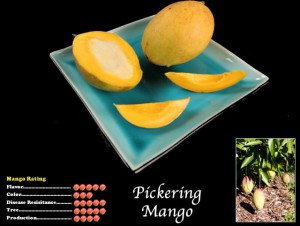 Pickering Mango