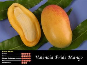 Valencia Pride Mango