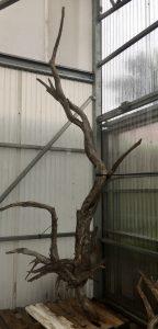 Driftwood #B3