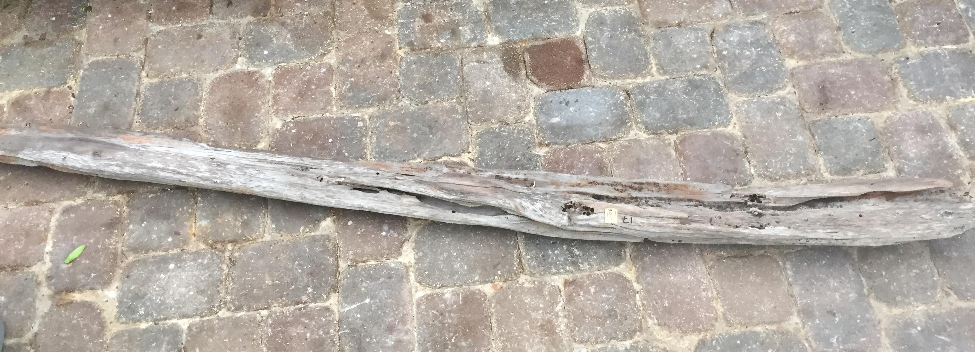 Driftwood #B5