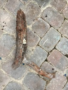 Driftwood #S6