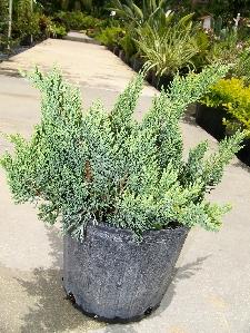 Zz Plant Pot