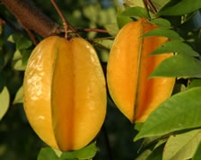 Starfruit Is An Odd Shaped Fruit With Great Flavor The Producing Season From August March Abundance Of During That Period