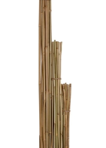 Bamboo Stakes, 6ft