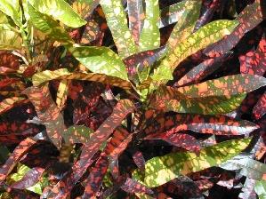 Croton, Franklin Roosevelt